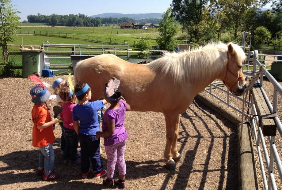 Pferd als Heiler 1